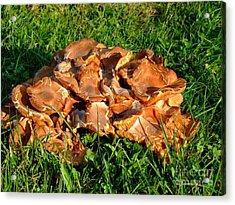 Acrylic Print featuring the photograph Mushroom by Deborah DeLaBarre