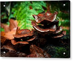 Acrylic Print featuring the photograph Mushroom Family Portrait by Haren Images- Kriss Haren