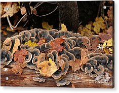 Acrylic Print featuring the photograph Mushroom Log by Ron Chilston