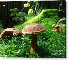 Mushrooms Acrylic Print by Olivia Narius