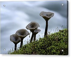 Acrylic Print featuring the photograph Mushrooms On Moss by Betty Depee