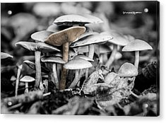 Acrylic Print featuring the photograph Mushrooms by Stwayne Keubrick