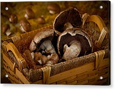 Mushrooms2166 Acrylic Print