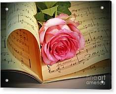 Musical Rose Acrylic Print by Inspired Nature Photography Fine Art Photography
