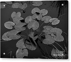 Acrylic Print featuring the photograph Muskeg Pond by Laura  Wong-Rose
