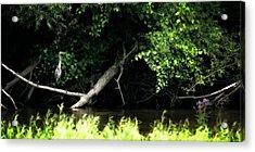 Muskegon River Heron Acrylic Print