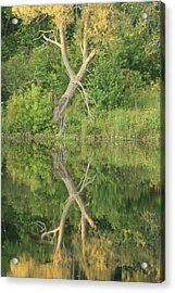 Acrylic Print featuring the photograph Muskoka Trees by Paula Brown