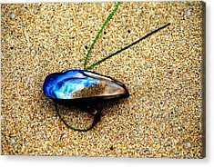 Mussel Shell And Seagrass Acrylic Print by Bob Wall