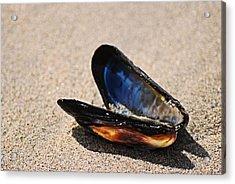 Mussel Shell Acrylic Print by Bob Wall
