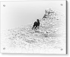 Mustang On Hill 2 Bw Acrylic Print