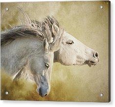 Mustang Run Acrylic Print by Ron  McGinnis
