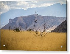 Acrylic Print featuring the photograph Mustang View by Beverly Parks