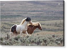Mustangs On The Move Acrylic Print