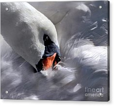 Acrylic Print featuring the digital art Mute Swan by Dale   Ford