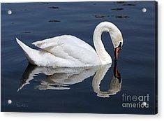 Mute Swan Kissing Its Reflection Acrylic Print by Susan Wiedmann