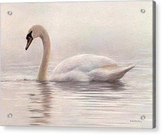 Mute Swan Painting Acrylic Print