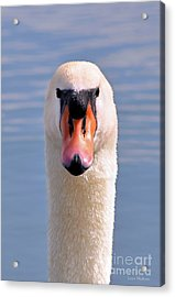 Acrylic Print featuring the photograph Mute Swan Staring by Susan Wiedmann