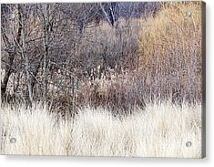 Muted Colors Of Winter Forest Acrylic Print by Elena Elisseeva