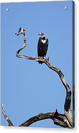Acrylic Print featuring the photograph Mutual Admiration by Fotosas Photography