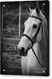 My Best Friend Acrylic Print by Clare Bevan