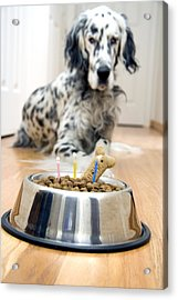 My Best Friend's Birthday Acrylic Print by Alexey Stiop