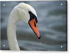 My Best Side Acrylic Print by Thomas Fouch