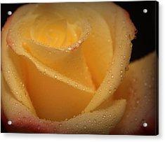 My Birthday Rose Acrylic Print by The Art Of Marilyn Ridoutt-Greene