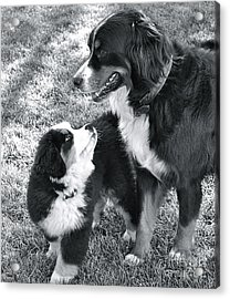 Acrylic Print featuring the photograph My Bodyguard by Barbara Dudley