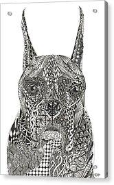 My Buddy - Boxer Acrylic Print by Dianne Ferrer