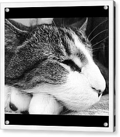 My Buddy Acrylic Print by Mike Maher