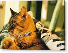 My Cat Acrylic Print by Debbie Wells