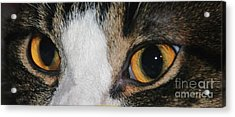 My Cat Is The Cat Of All Cats Acrylic Print by PainterArtist FIN
