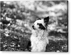 My Dog Acrylic Print by Daniel Precht