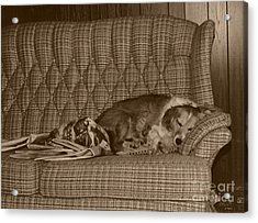 My Dog Sleeping On The Couch Circa 1976 Acrylic Print by ImagesAsArt Photos And Graphics