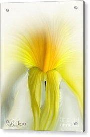 My Dream's Dancer Acrylic Print by Mehran Akhzari