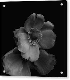 Acrylic Print featuring the photograph My Fair Lady by Rachel Mirror