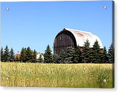 My Favorite Barn Acrylic Print by Sheryl Burns
