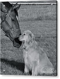 Acrylic Print featuring the photograph My Friend by Barbara Dudley