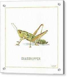 My Greenhouse Grasshopper Acrylic Print by Lisa Audit