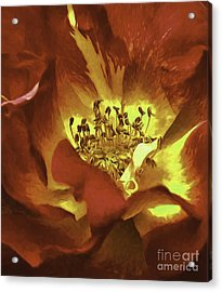 My Heart Inflamed Acrylic Print