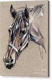 My Horse Portrait Drawing Acrylic Print by Daliana Pacuraru
