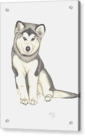 Acrylic Print featuring the drawing My Husky Puppy-misty by Patricia Hiltz