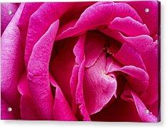 My Last Rose Acrylic Print by Kenneth Feliciano
