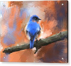 My Little Bluebird Acrylic Print