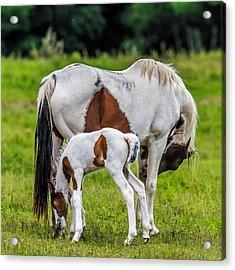 My Little Pony Acrylic Print by Paul Freidlund
