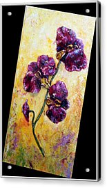 My Little Violet Orchids  Acrylic Print