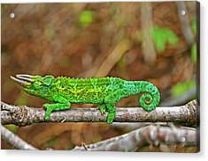 My Magical Tail Acrylic Print by Peggy Collins