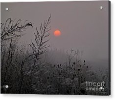 My Misty Morning Acrylic Print by AmaS Art
