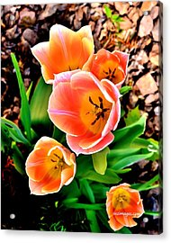 My Mom's Tulips Acrylic Print