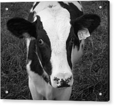My Name Is Cow - Black And White Acrylic Print by Joseph Skompski